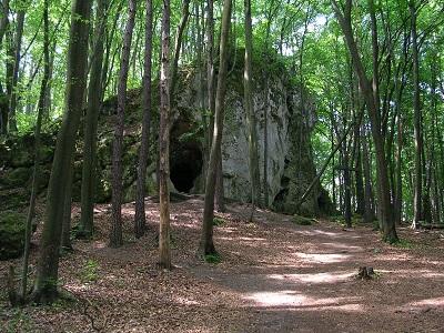 Jaskinia wlesie